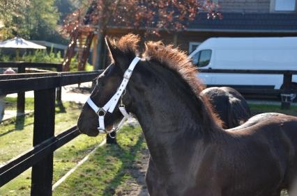 paard vlug maken dressuur